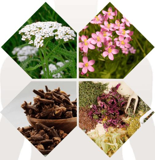 Detoxic - composizione - antiparassitario - ingredienti - come si usa - funziona
