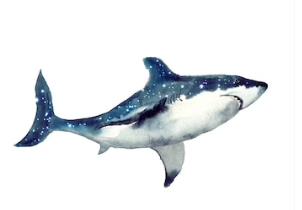 Omega Shark - funziona - composizione - ingredienti - come si usa