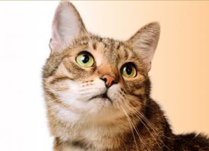 Happy Pet - dove si compra? - prezzo - farmacia - amazon