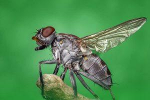 Pest Away Mini - funziona - come si usa