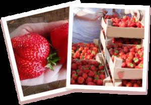 Home Berry Box - in farmacia - originale - Italia