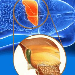 Cerotti BioDetox - funziona - ingredienti - composizione - come si usa